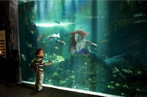 A Pequena Sereia acabou num aquário