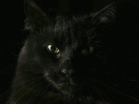 gato-preto