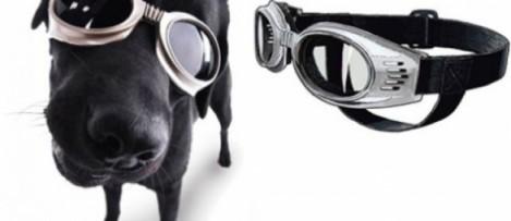 oculoscao
